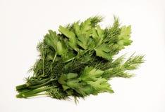greenfield Świeży greenery dilled Pietruszka Wiązka greenery Składnik zdrowa dieta dieta zdrowa Sałatka zdjęcie royalty free