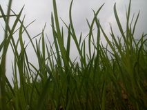 greenfield obraz stock