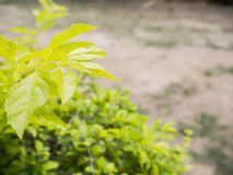 greenfield zdjęcia royalty free