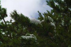 greenfield zdjęcie royalty free