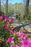 Greenfield Park bridge and pink azaleas in Spring. Royalty Free Stock Images