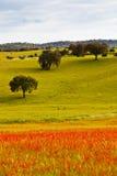 greenfield początkująca wiosna obrazy stock