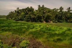 Greenfield teren -2 fotografia royalty free