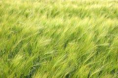 Greenfield van de lente na regen royalty-vrije stock afbeeldingen
