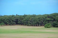 Greenfield z wiecznozielonym lasem i piękny niebieskie niebo dzień przy Centennial parkiem, Sydney, Australia zdjęcie royalty free