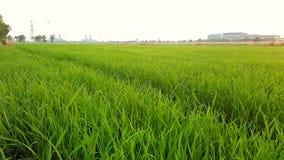 Greenfieldgräs med fabriksbakgrund Royaltyfri Fotografi