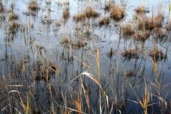 greenfieldsvåtmarker Royaltyfri Bild