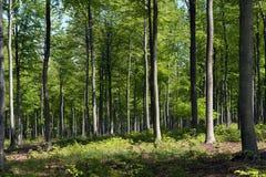 GreenForest Στοκ εικόνες με δικαίωμα ελεύθερης χρήσης