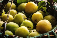 Greengage stock photography