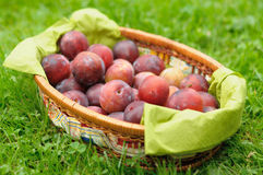 Greengage plums Royalty Free Stock Photography