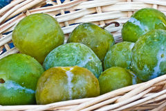 Greengages in basket Stock Images