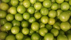 Greengages lined up at the grocery store. royalty free stock photo