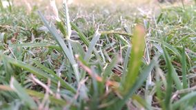 Greengrass immagini stock libere da diritti