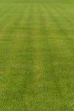 Greengrass. Line green grass texture background Stock Photos