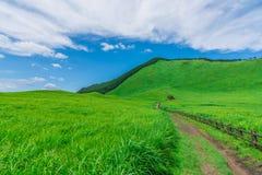 Greengrass på den Soni platån, Nara Prefecture, Japan Royaltyfria Foton