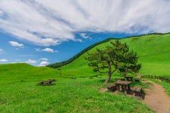 Greengrass an Soni-Hochebene, Nara Prefecture, Japan lizenzfreies stockbild