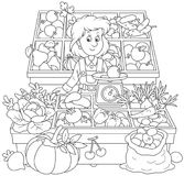 Greengrocer in a market. Smiling girl trader standing behind her counter surrounded by vegetables and fruit, a black and white vector illustration in a cartoon Stock Photos