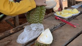 Greengrocer peel durian fruit. The durian  is the fruit of several tree species belonging to the genus Durio and the family Malvaceae (although some taxonomists stock footage