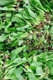 Greengrocery frais dans la pile Images stock