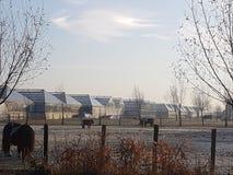 Greenhiuses Голландия Westland Стоковая Фотография