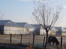 Greenhiuses Holandia Westland Zdjęcia Royalty Free