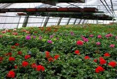 Greenhouse. Stock Photo