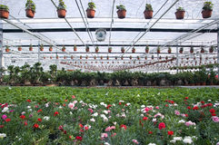 Greenhouse. With flowers-wide angle Stock Photography
