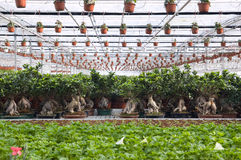 Greenhouse. With flowers-wide angle Royalty Free Stock Photography