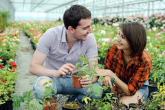 In a greenhouse Royalty Free Stock Photo