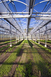 Greenhouse 2. The interior of a large greenhouse Stock Photography