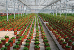 Greenhouse. With new young planting stock images