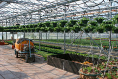Greenhouse. With machinery and hanging plants stock photo