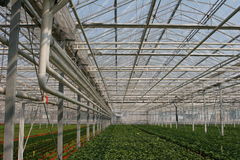 Greenhouse. With young plants in pots stock photos