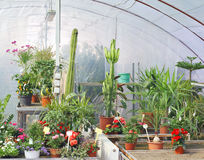 Greenhouse. Young potted plants in greenhouse stock images