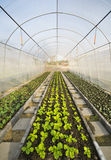 Greenhouse. Vegetable Greenhouse with blue sky Stock Photos