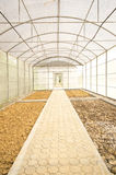 Greenhouse. Interior of an empty greenhouse Royalty Free Stock Image