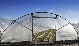 Greenhouse Stock Images