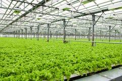 Free Greenhouse Stock Image - 30215261