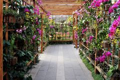 Greenhouse. Full of sunshine greenhouses of nature breath Royalty Free Stock Image
