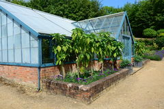 greenhouse Photos stock