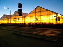 Greenhouse. Big greenhouse in evening light. Road in front Stock Photo