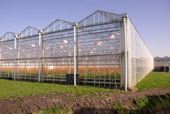 Greenhouse. A greenhouse with flowers at a sunny day in winter Royalty Free Stock Photography