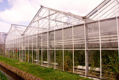 Greenhouse. A greenhouse along a ditch with orchid plants Stock Images