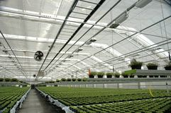 Free Greenhouse Stock Photos - 4906323