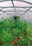 greenhouse Photographie stock