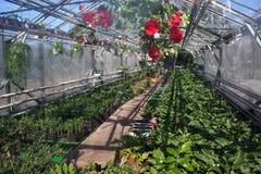 Greenhouse  Stock Photos