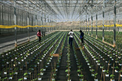 greenhouse Images stock