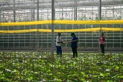 greenhouse Photographie stock libre de droits