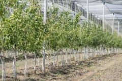 greenhouse Photo stock