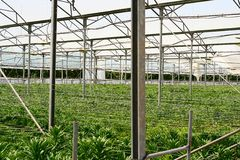 Greenhouse. New plants in greenhouse Royalty Free Stock Photography